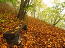 The autumn misty and sunny daybreak at beech forest, old abandoned bench below trees. Fog between beech branches. Stock Photography