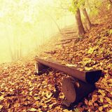 The autumn misty and sunny daybreak at beech forest, old abandoned bench below trees. Fog between beech branches without leaves. Stock Photography