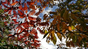 Autumn Mix Stock Images