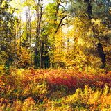 Autumn Mixed Forest Royalty Free Stock Images