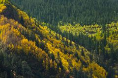 Autumn mixed forest. yellow color trees.  Stock Photo