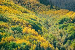 Autumn mixed forest. yellow color trees. Autumn mixed forest. yellow color trees Stock Photo