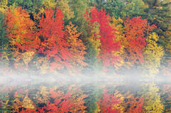 Autumn, Moccasin Lake in Fog Royalty Free Stock Photography