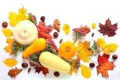 Autumn Mock Up foto de stock royalty free