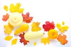 Autumn Mock Up imagens de stock