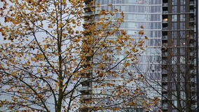 Autumn modern city tree stock footage