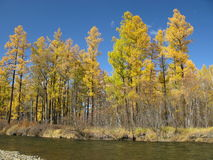Autumn in Mongolia. Autumn colors in landscape with blue sky in Mongolia Stock Photo