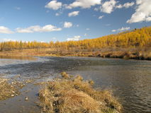 Autumn in Mongolia. Autumn colors in landscape with blue sky in Mongolia Royalty Free Stock Photo