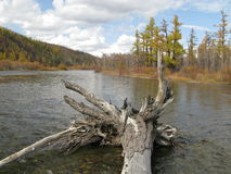 Autumn in Mongolia. Mongolian river in Autumn colors Royalty Free Stock Photography