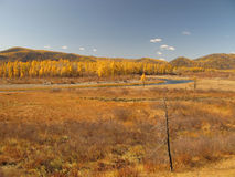 Autumn in Mongolia. Autumn colors in landscape with blue sky in Mongolia Stock Photos