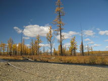 Autumn in Mongolia. Autumn colors in landscape with blue sky in Mongolia Royalty Free Stock Photos