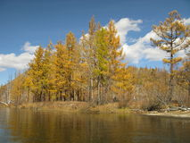 Autumn in Mongolia. Autumn colors in landscape with blue sky in Mongolia Stock Images