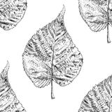 Autumn monochrome seamless stylized leaf pattern. Stock Photos