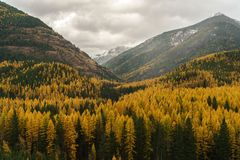 A Montana Fall. Autumn in Montana, Western United States Stock Image