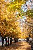 Autumn in montreal. Sunny montreal with autumn trees royalty free stock photos