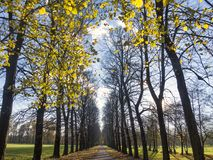Autumn in the Monza park Stock Photography