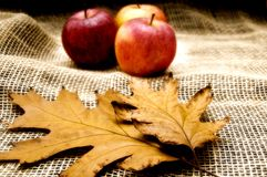 Autumn mood Stock Images