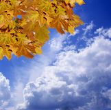 Autumn mood. Yellow autumn leaves against the cloudy sky Stock Photo