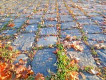 Cobbled road with autumn leaves. Autumn mood background. Cobbled road with brown leaves royalty free stock photos