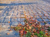 Cobbled road with autumn leaves. Autumn mood background. Cobbled road with brown leaves Stock Photos
