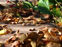 Autumn leaves on concrete. Autumn mood background. Dry leaves on concrete royalty free stock photo