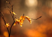 Autumn mood. A beautiful play of colors with autumn mood Stock Photography