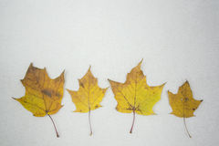 Autumn mood. Bright leaves can make us happy even when fallen down from the trees Stock Photo