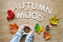 Autumn mood composition background Royalty Free Stock Image