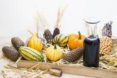 Autumn mood with decorative pumpkins Stock Photography