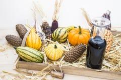 Autumn mood with decorative pumpkins Stock Photos