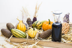Autumn mood with decorative pumpkins Royalty Free Stock Image