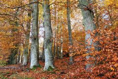 Autumn mood deep in the forest royalty free stock photos