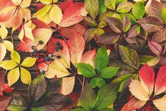 Background of colorful grape leaves. stock photos