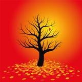 Autumn Mood Red Foliage Stock Photography