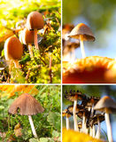 Autumn mood, mushroom season Royalty Free Stock Photo