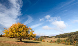 In the Autumn Mood Royalty Free Stock Photography