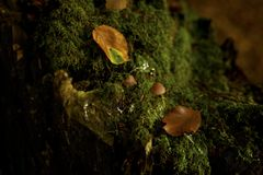 Autumn mood on an old stump stock photography