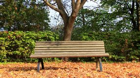 Autumn mood  one wooden bench with falling leaves Royalty Free Stock Photo
