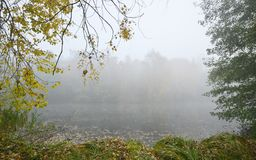 Autumn mood at the pond. Aun foggy morning on the shore of the pond in October, Czech Republic stock photography