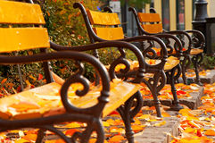 Free Autumn Mood With Benches Royalty Free Stock Photo - 21856575
