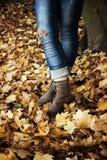 Autumn mood Stock Image