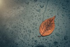 Raindrops and fallen yellow leaf stuck on the window. royalty free stock image