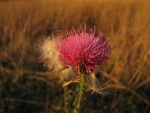 Autumn moods Stock Photography