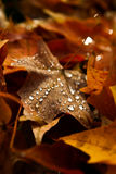 Autumn Morning. Fallen leaves on a dewy autumn morning Stock Images