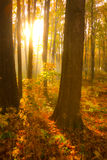 Autumn morning Royalty Free Stock Photos