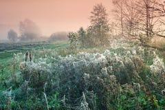 Autumn morning. Cobwebby meadow at misty sunrise royalty free stock image