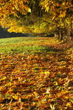 Autumn morning. Colorful autumn leaves on the field with part of the tree showing above stock photos