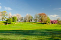 Autumn morning. Bowness-on-Windermere park on a autumn morning Royalty Free Stock Photo