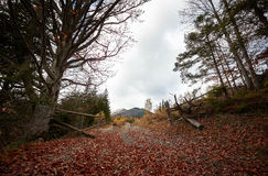Autumn morning in the Carpathian mountains. Landscape with the end of fall and beginning of winter in mountains Carpathians. Vuhati kamin Stock Photography