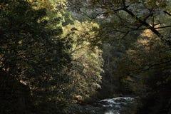 Autumn Morning At der Fluss Lizenzfreie Stockfotos